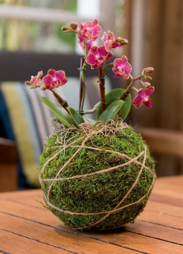 Kokedama selber machen japanische Gartenkunst blühende Zimmerpflanzen