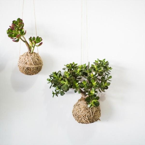 Kokedama selber machen japanische Gartenkunst hängende Zimmerpflanzen