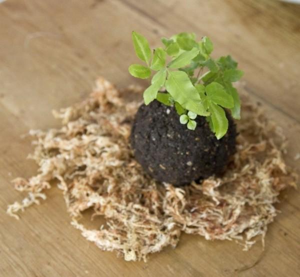 Kokedama selber machen japanische Mooskugel Dekoration