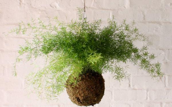 Kokedama selber machen japanische Mooskugel Farne hängende Pflanzen