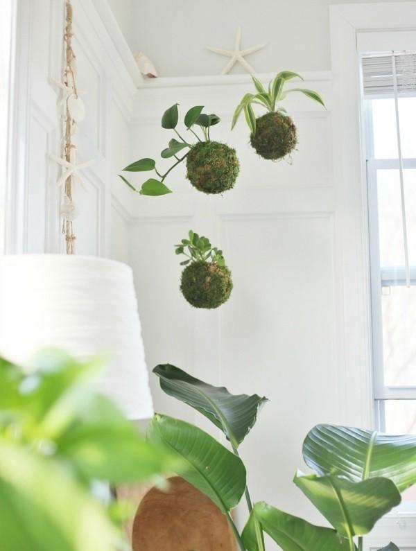 Kokedama selber machen japanische Mooskugel hängende Zimmerpflanzen