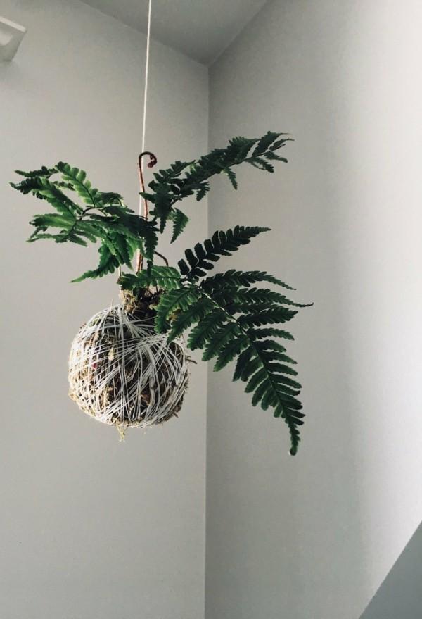 Kokedama selber machen japanische Zimmerpflanzen hängennd