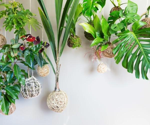 Kokedama selber machen originelle hängende Zimmerpflanzen