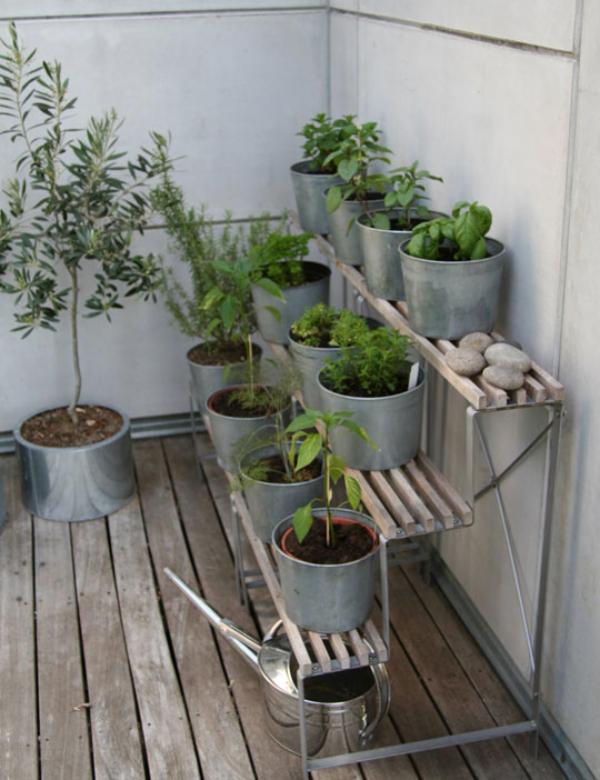 Kräuter zuhause anbauen pflegen Standort auf der Veranda in Töpfen auf einem einfachen Regal
