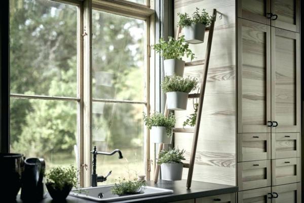 Kräuter zuhause anbauen pflegen angelehnte Leiter perfekter Ort Küchenkräuter in Töpfen