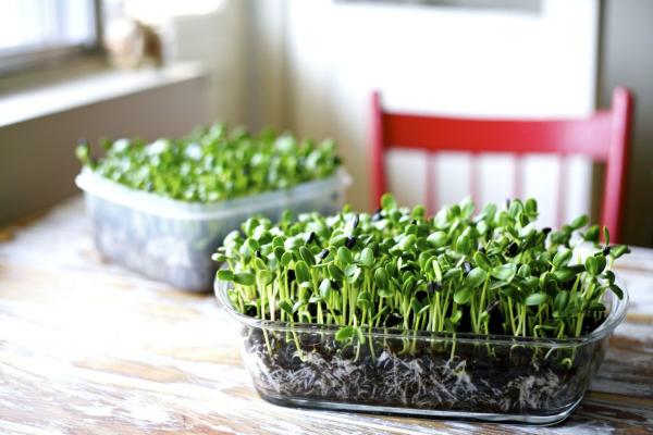 Kräuter zuhause anbauen pflegen das Wachstum aus der Nähe verfolgen