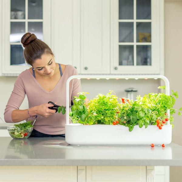 Kräuter zuhause anbauen pflegen frischen Gemüsesalat mit Küchenkräutern bestreuen