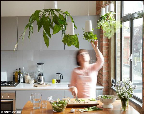 Kräuter zuhause anbauen pflegen frischer Geschmack eigenartiges Aroma