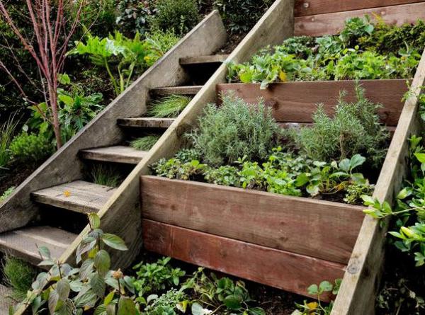 Kräuter zuhause anbauen pflegen im Garten in speziellen Kräuterbeeten