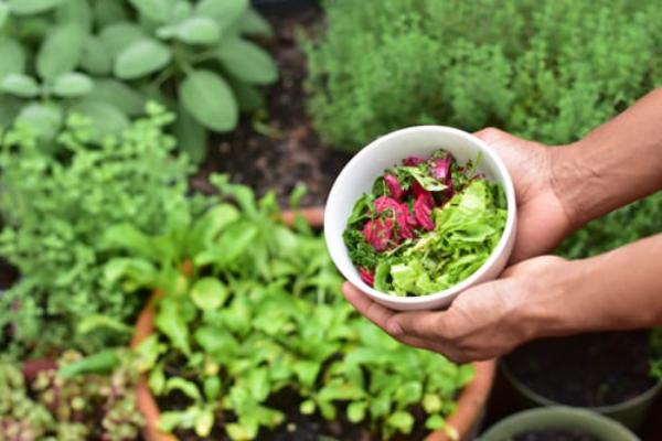Kräuter zuhause anbauen pflegen im Garten sammeln