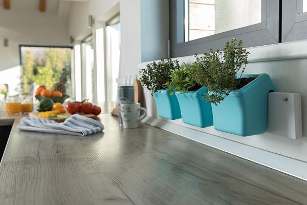 Kräuter zuhause anbauen pflegen in der Küche 3 Töpfe an der Wand über Arbeitsplatte