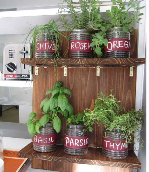 Kräuter zuhause anbauen pflegen in der Küche auf zwei Regalen in einfachen Plastikbehältern