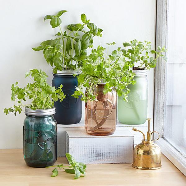 Kräuter zuhause anbauen pflegen neben dem Fenster platziert in Glasbehältern
