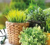 Kräuter zuhause anbauen und pflegen – so leicht geht es!