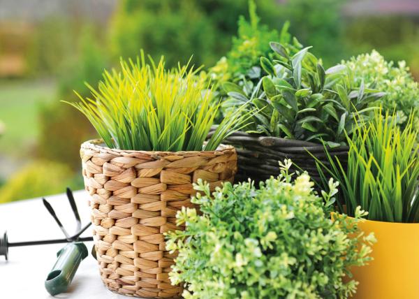 Kräuter zuhause anbauen pflegen schöner Duft nicht viel Arbeit