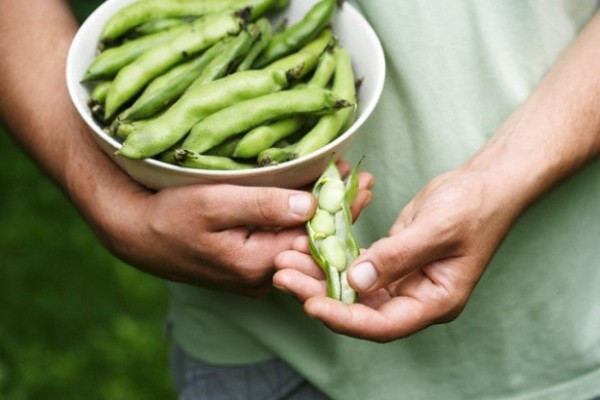 Magnesiumreiche Lebensmittel Bohnen Erbsen Kichererbsen viele gesunde Inhaltsstoffe