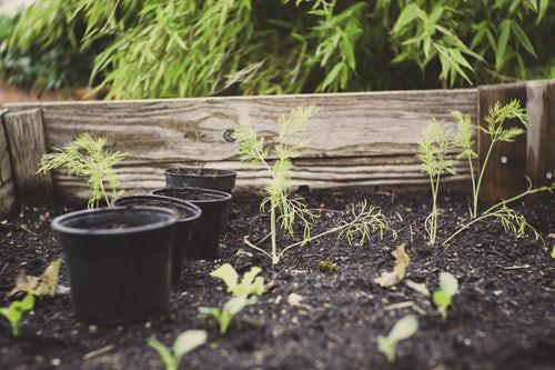 Urban Gardening Küchenkräuter draußen im Garten