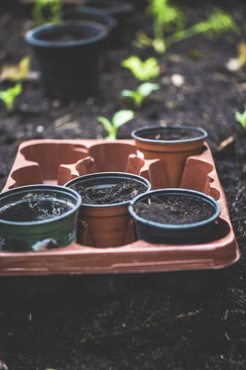 Urban Gardening Kräuter vom Tops ins Gartenbeet legen