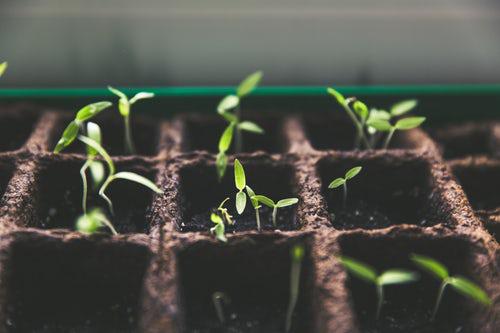 Urban Gardening anbauen und pflegen in kleinen Gefäßen