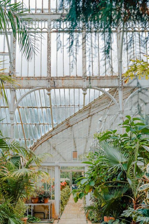 Urban Gardening grüne Pflanzen Palmen für einen natürlichen Touch