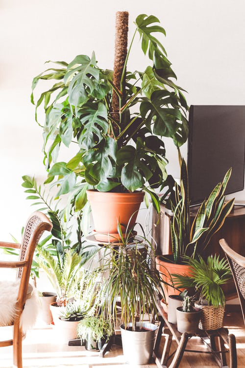 Urban Gardening pflegeleichte Zimmerpflanzen für eine grüne Note zu Hause