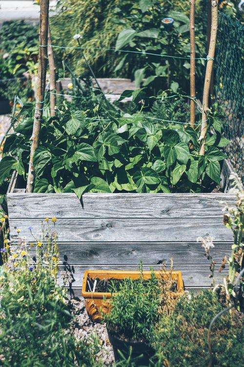 Urban Gardening sinnvolle Beschäftigung im Freien gesund Pflanzen anbauen