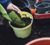 Urban Gardening – der letzte Trend in der Gärtnerei
