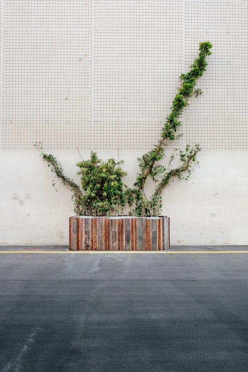 Urban Gardening wenig Grün wirkt beruhigend