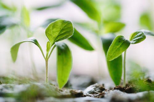 Urban Gardening zusehen wie die Pflanzen wachsen