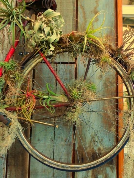ausgefallene fahrraddeko mit tillandsien