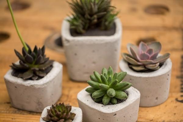 beton deko - tolle kleine pflanzenideen