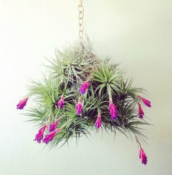 blumenampel arrangieren mit luftpflanzen tillandsien
