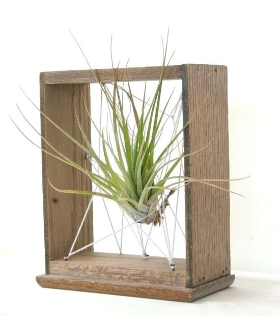 diy deko idee mit tillandsien luftpflanzen