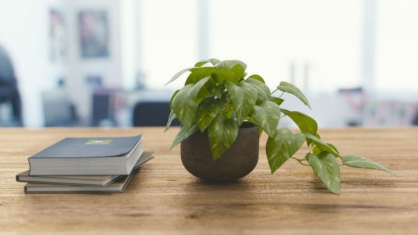 gesundes wohnen zimmerpflanzen