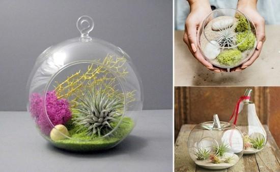 glas terrarien ideen mini mit tillandsien