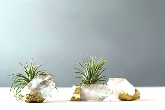 gold kristalle edelsteine tillandsien luftpflanzen