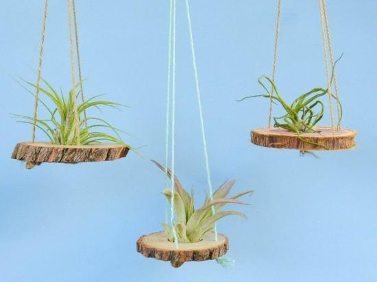 hängende luftpflanzen tillandsien ideen