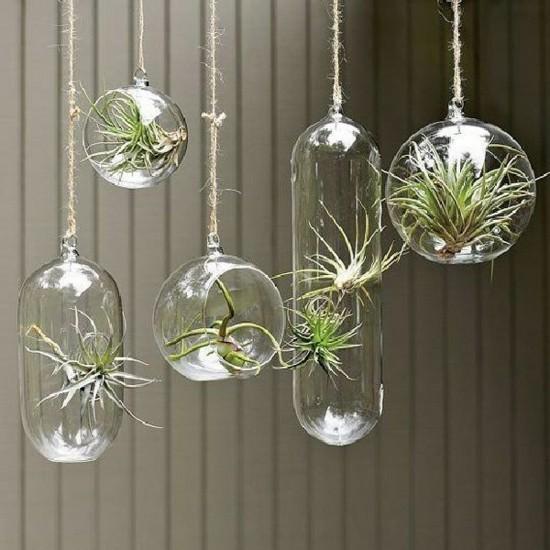 hängende tillandsien glas deko