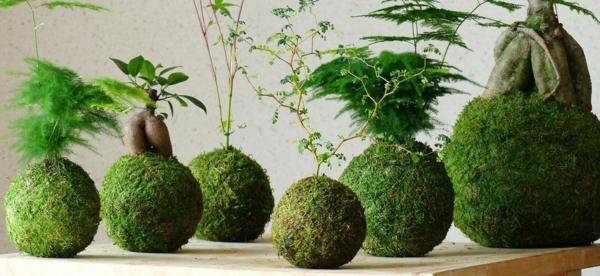 hängender Garten Kokedama Moosbälle selber machen