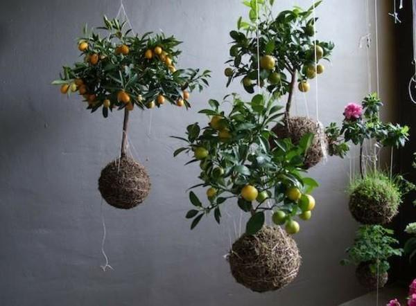 hängender Garten Moosbälle Kokedama selber machen