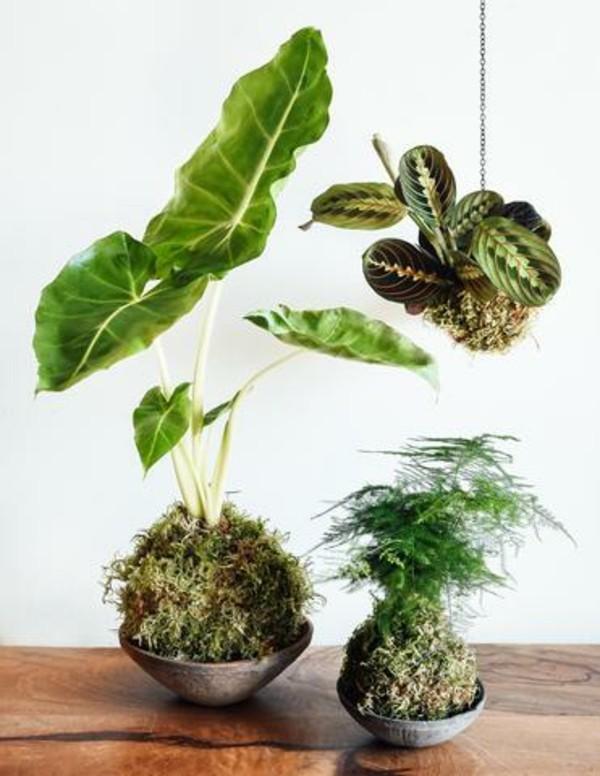 hängender Garten Mooskugel Kokedama selber machen Zimmerpflanzen