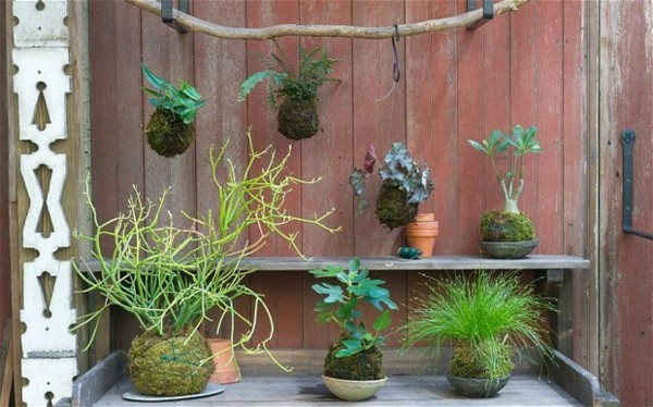 hängender Garten Mooskugel Kokedama selbst erstellen