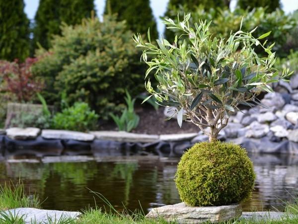 japanische Gartenkunst Bonsai Baum Mooskugel DIY Kokedama