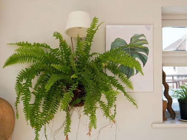 japanische Gartenkunst Bonsai Farne Zimmerpflanzen DIY Kokedama