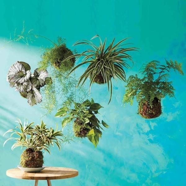 japanische Gartenkunst Bonsai hängende Mooskugel DIY Kokedama