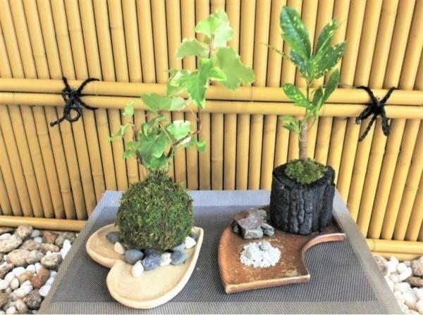 japanische Gartenkunst Ideen Mooskugel Kokedama