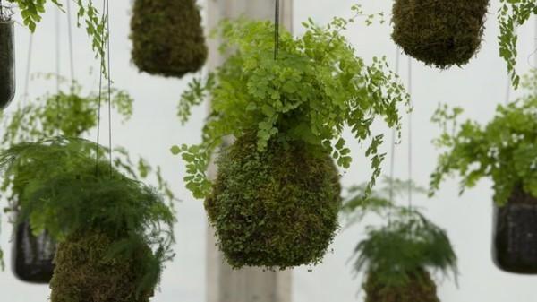 japanische Gartenkunst Ideen Mooskugel hängend Kokedama