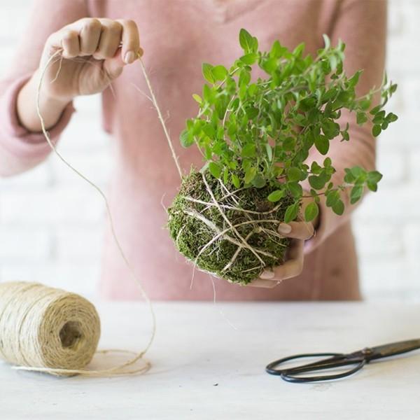 japanische Gartenkunst Mooskugel DIY Kokedama Moosball mit Garn umwickeln