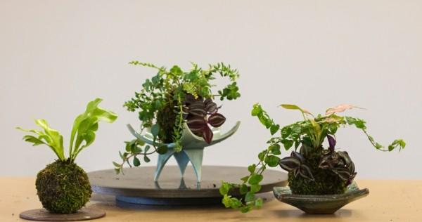 japanische Gartenkunst Mooskugel DIY Kokedama