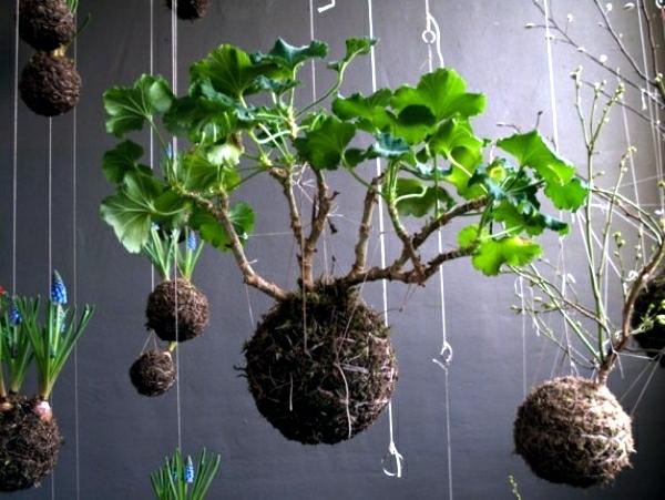 japanische Gartenkunst hängende Bonsai Mooskugel Kokedama